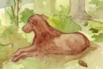 Watercolour - Schaeffer